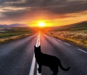 Куда уходят кошки Куда-уходят-кошки_рассказ-Елены-Дубровиной_-кот_дорога