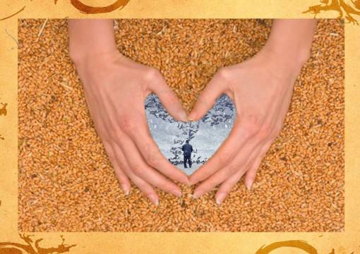 Пшеничное сердце_рассказ Елены Дубровиной_старик кормит голубей