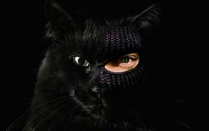 Разбойник_рассказ Елены Дубровиной_черный кот